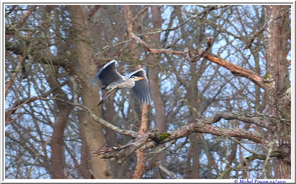 [Ouvert] FIL - Oiseaux. - Page 8 Dsc10545