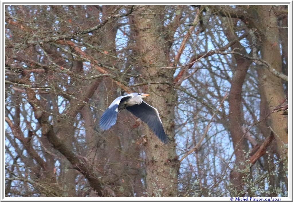 [Ouvert] FIL - Oiseaux. - Page 8 Dsc10546