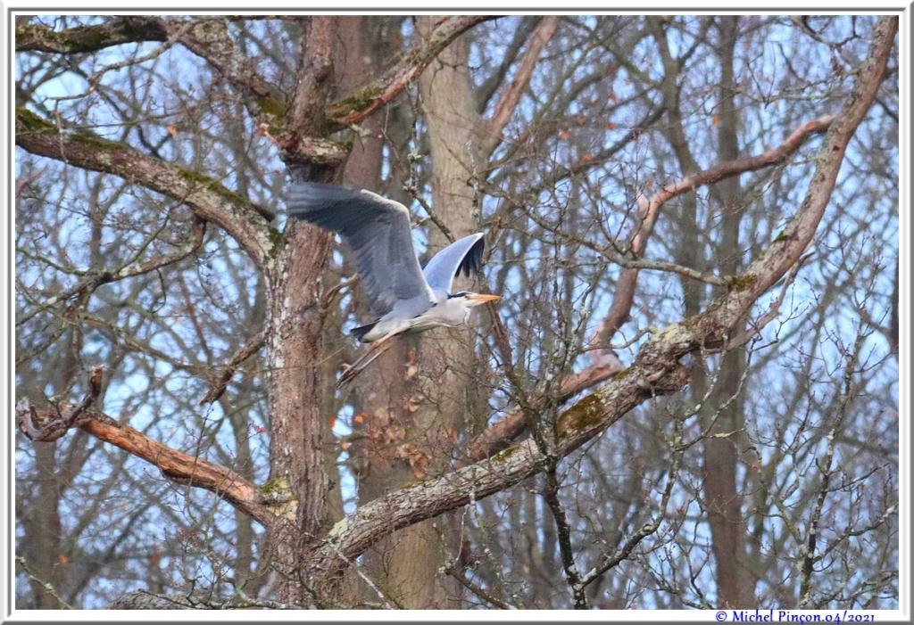 [Ouvert] FIL - Oiseaux. - Page 8 Dsc10547