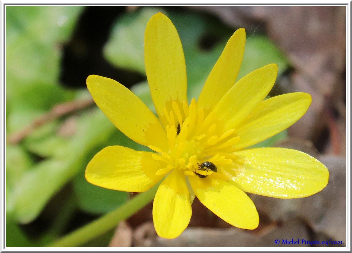 [Fil ouvert] Fleurs et plantes - Page 33 Dsc10767