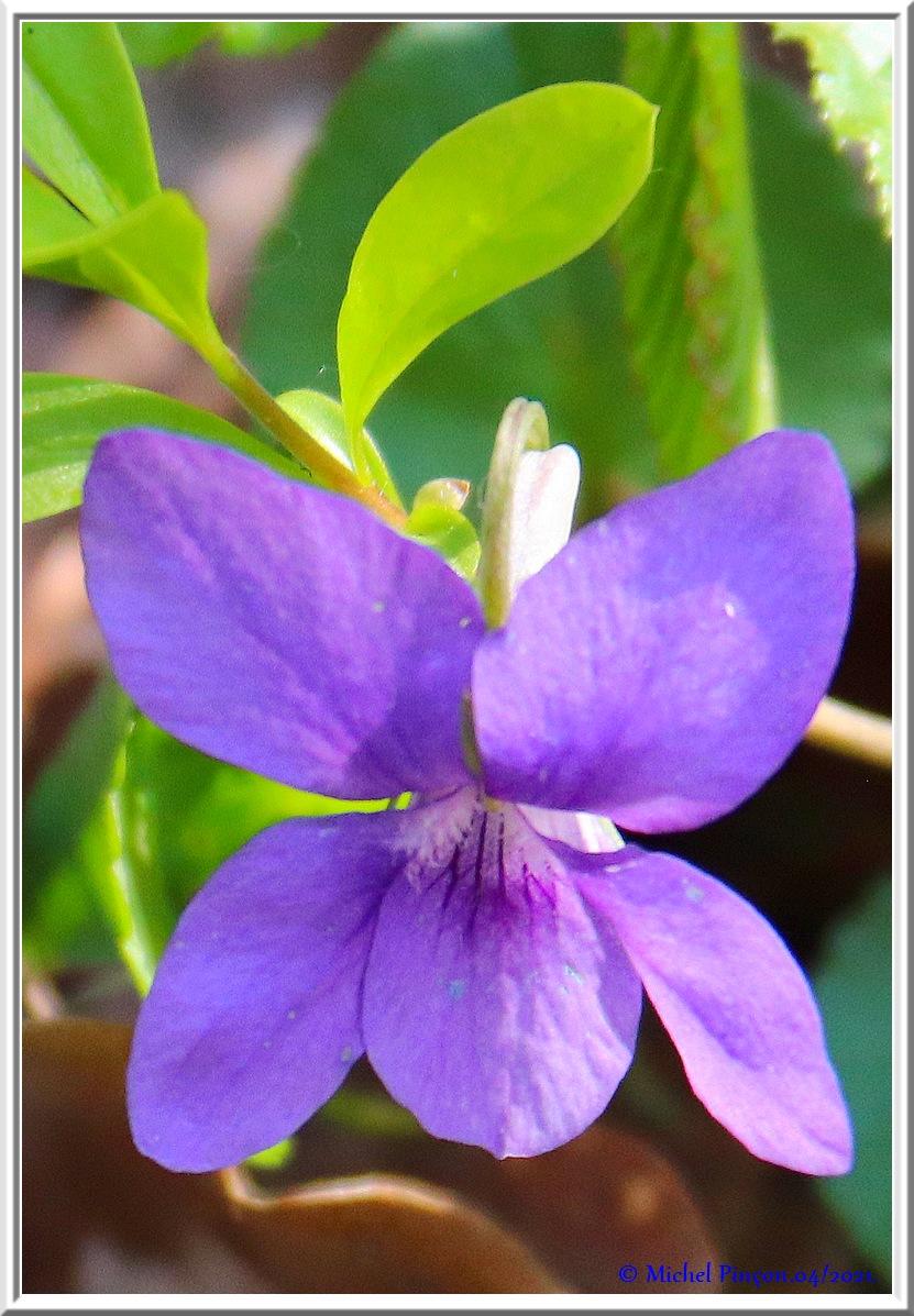 [Fil ouvert] Fleurs et plantes - Page 33 Dsc10768