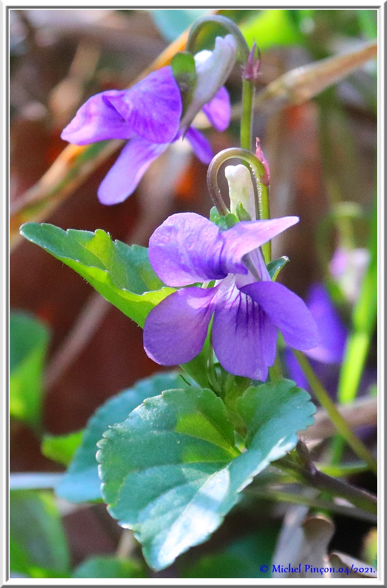 [Fil ouvert] Fleurs et plantes - Page 33 Dsc10769
