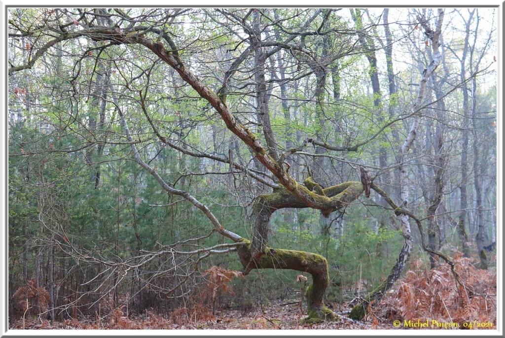 [fil ouvert] la forêt dans tous ses états - Page 30 Dsc10795