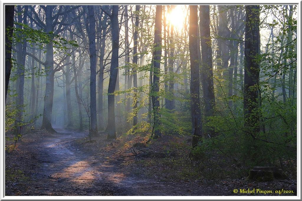 [fil ouvert] la forêt dans tous ses états - Page 30 Dsc10796