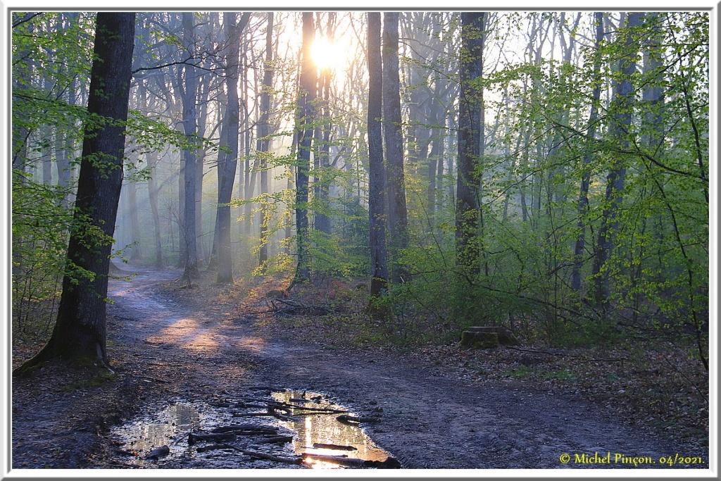 [fil ouvert] la forêt dans tous ses états - Page 30 Dsc10797
