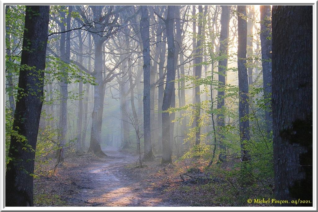 [fil ouvert] la forêt dans tous ses états - Page 30 Dsc10798
