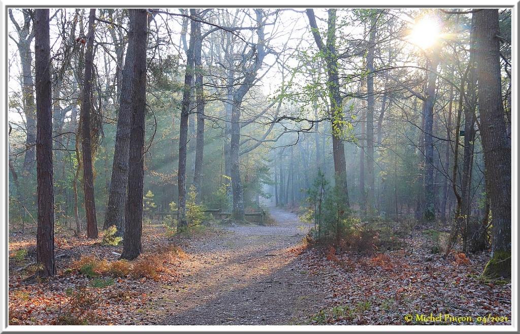 [fil ouvert] la forêt dans tous ses états - Page 30 Dsc10799