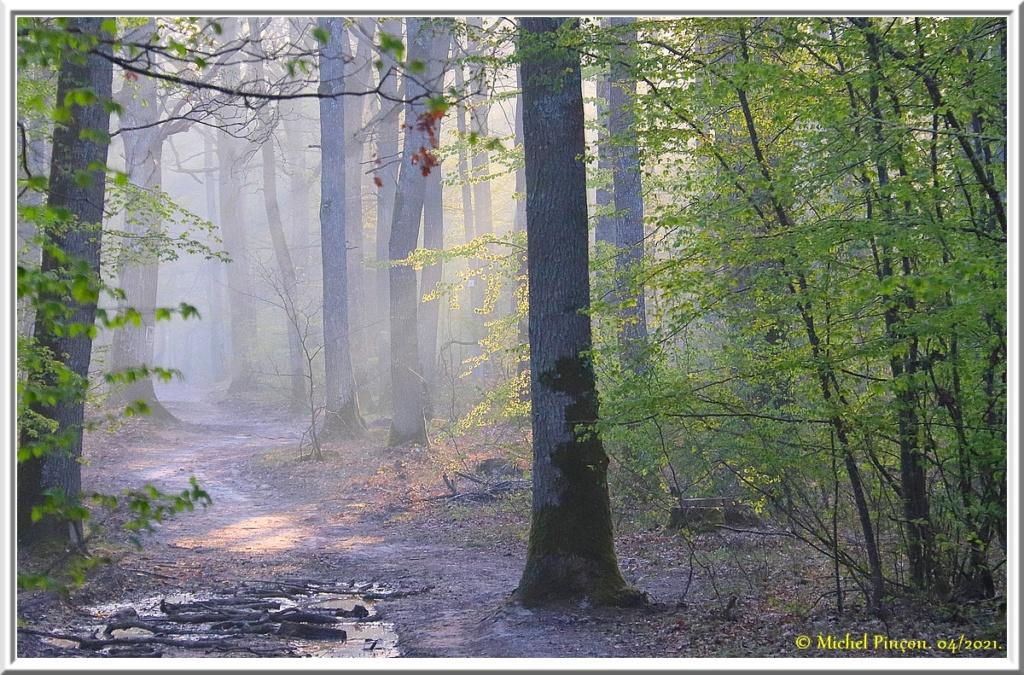 [fil ouvert] la forêt dans tous ses états - Page 30 Dsc10800