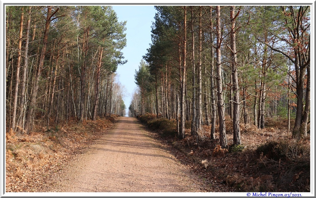 [fil ouvert] la forêt dans tous ses états - Page 30 Dsc10801