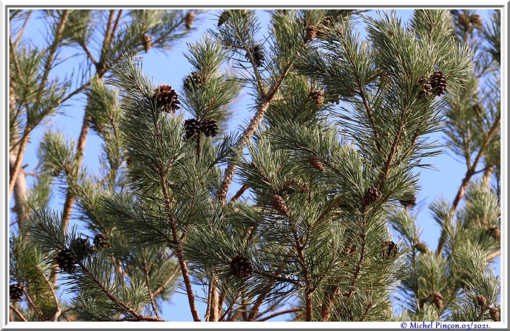 [fil ouvert] la forêt dans tous ses états - Page 30 Dsc10802