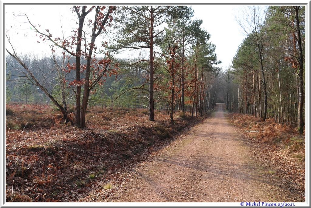 [fil ouvert] la forêt dans tous ses états - Page 30 Dsc10803