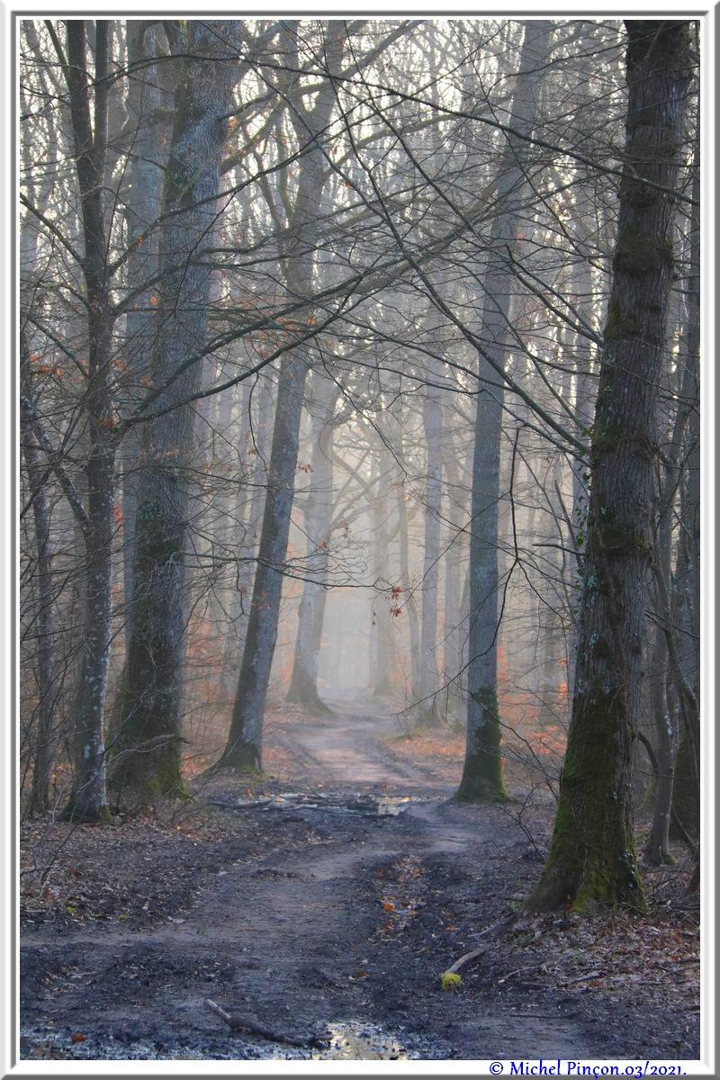 [fil ouvert] la forêt dans tous ses états - Page 30 Dsc10804