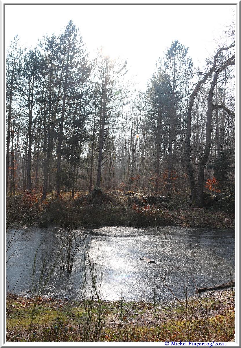 [fil ouvert] la forêt dans tous ses états - Page 30 Dsc10805