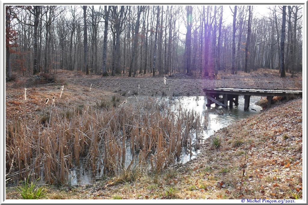 [fil ouvert] la forêt dans tous ses états - Page 30 Dsc10806