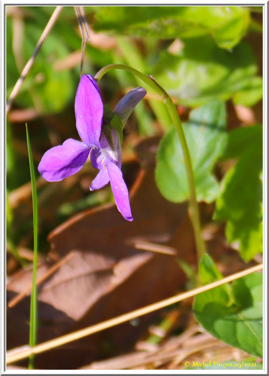 [Fil ouvert] Fleurs et plantes - Page 33 Dsc10824
