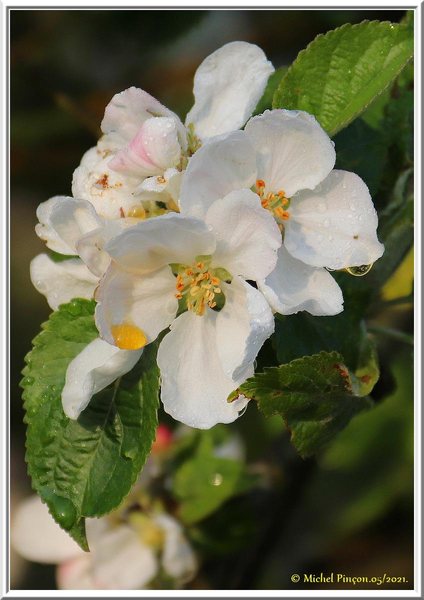 [Fil ouvert] Fleurs et plantes - Page 33 Dsc10825