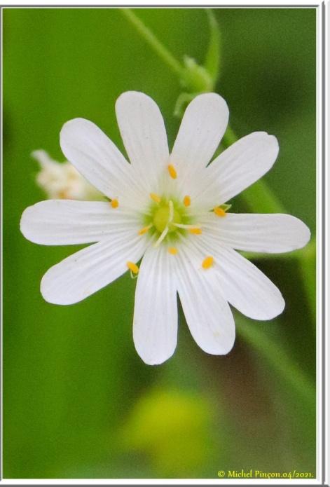 [Fil ouvert] Fleurs et plantes - Page 33 Dsc10826