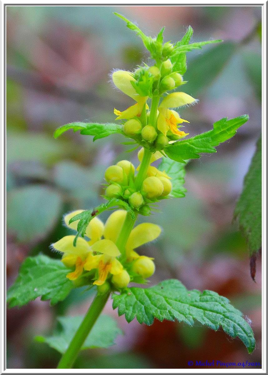 [Fil ouvert] Fleurs et plantes - Page 33 Dsc10829