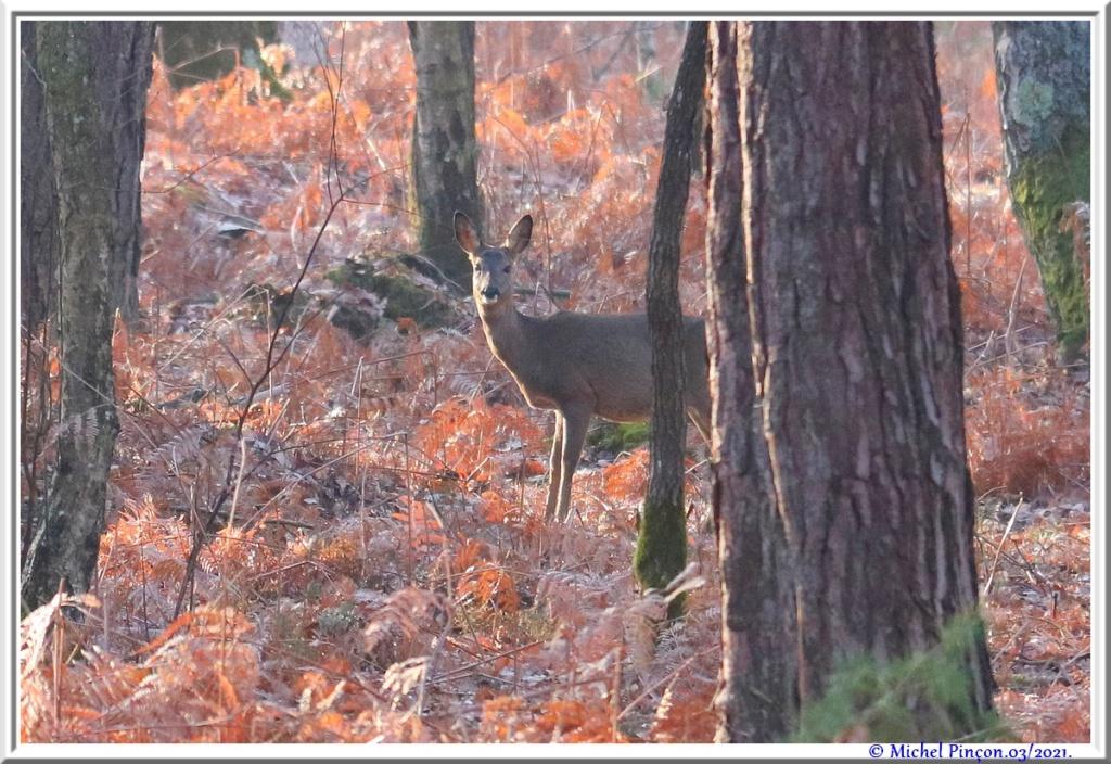 [fil ouvert] la forêt dans tous ses états - Page 30 Dsc10830