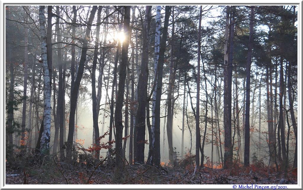 [fil ouvert] la forêt dans tous ses états - Page 30 Dsc10831
