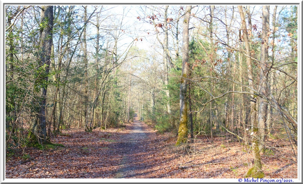 [fil ouvert] la forêt dans tous ses états - Page 30 Dsc10832