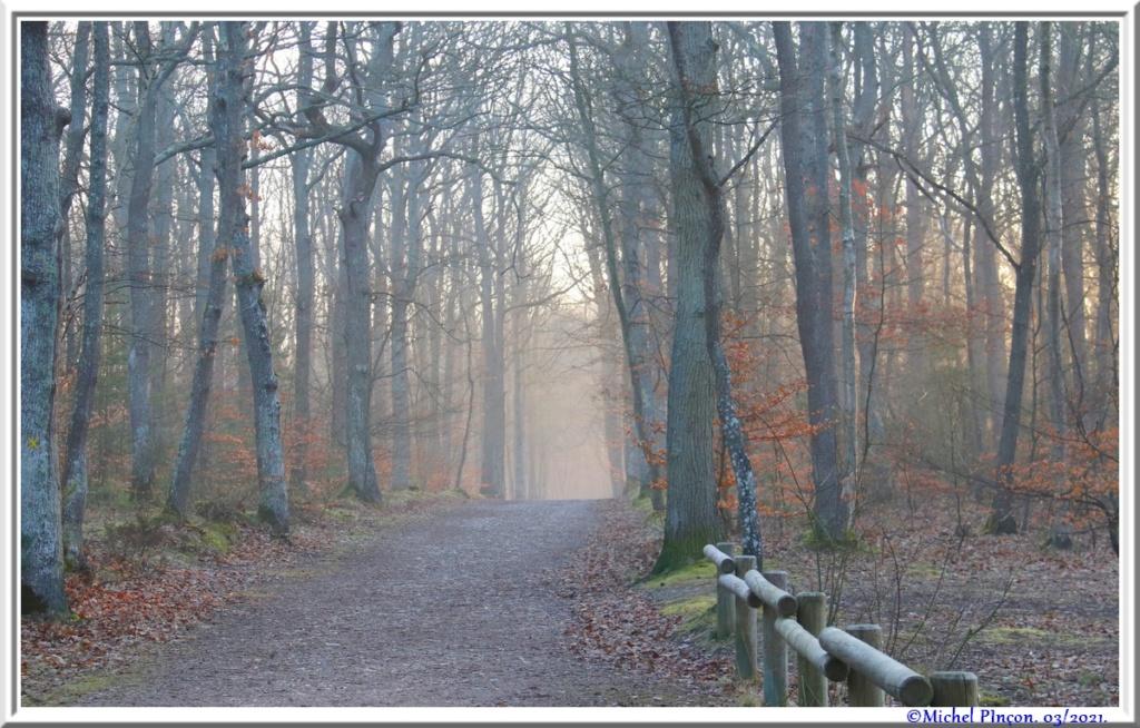 [fil ouvert] la forêt dans tous ses états - Page 30 Dsc10833