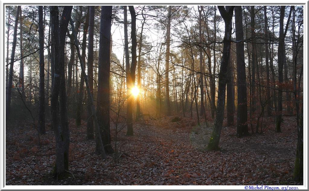 [fil ouvert] la forêt dans tous ses états - Page 30 Dsc10834