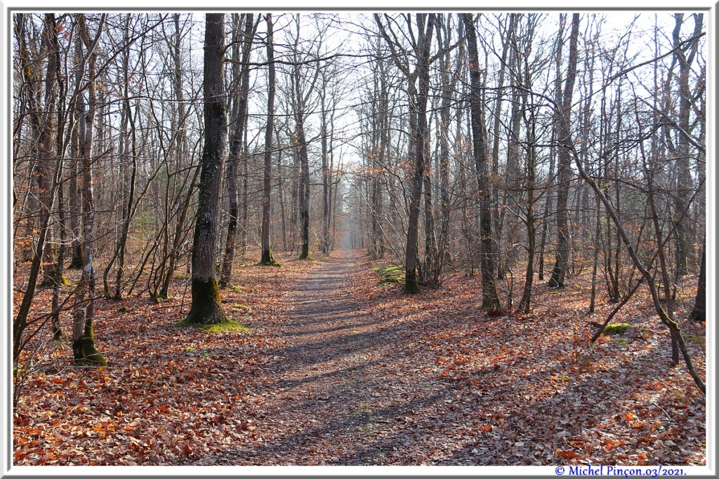 [fil ouvert] la forêt dans tous ses états - Page 30 Dsc10835