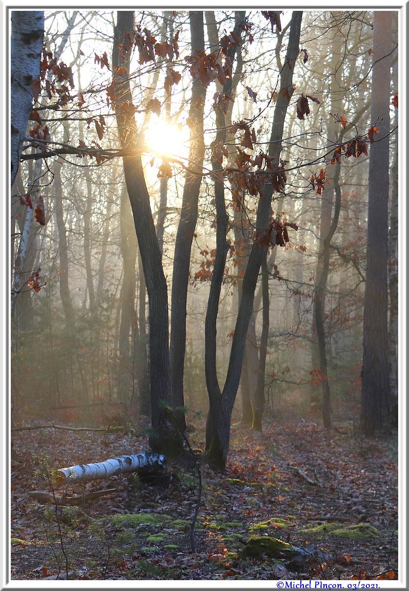 [fil ouvert] la forêt dans tous ses états - Page 30 Dsc10837