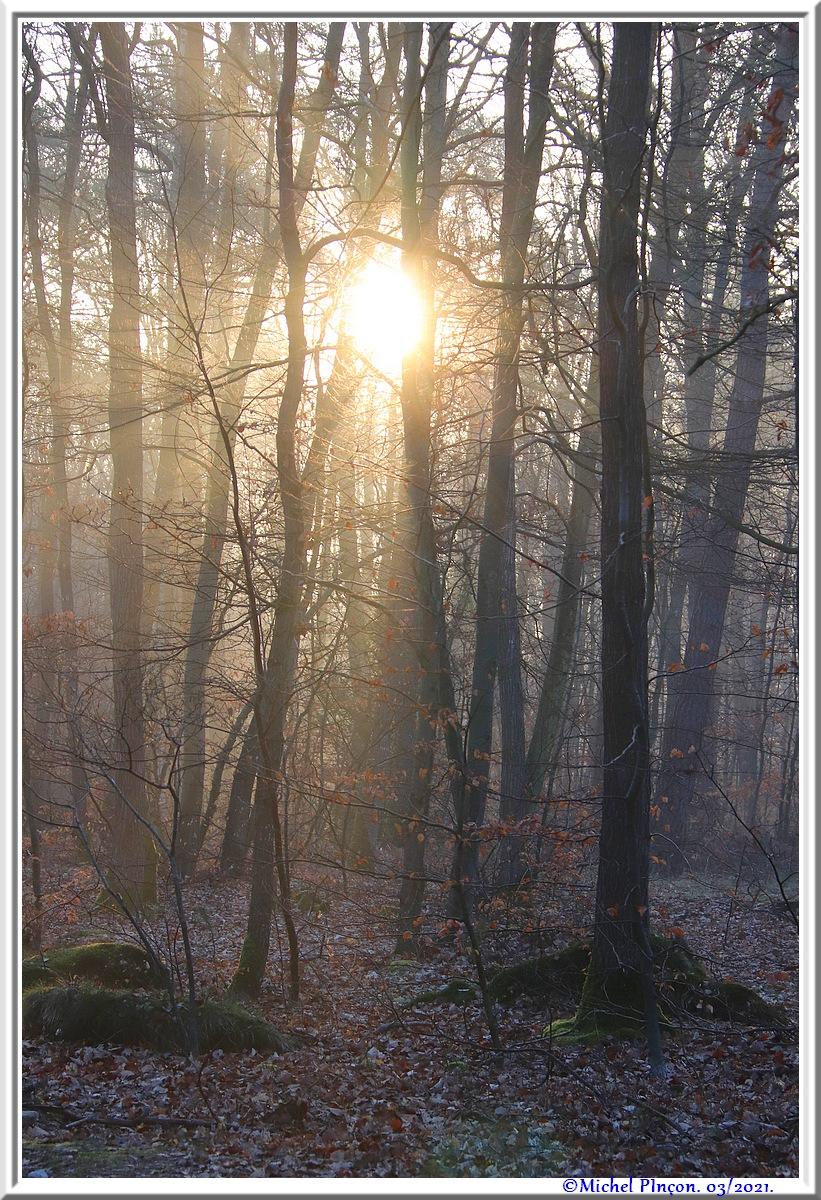 [fil ouvert] la forêt dans tous ses états - Page 30 Dsc10838