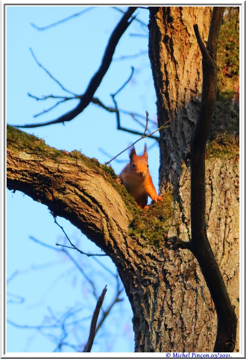 [fil ouvert] la forêt dans tous ses états - Page 30 Dsc10839