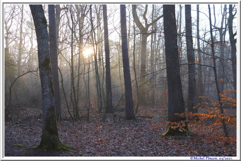 [fil ouvert] la forêt dans tous ses états - Page 30 Dsc10840