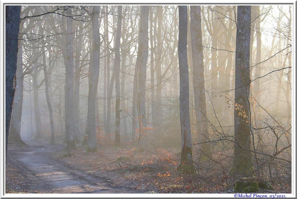 [fil ouvert] la forêt dans tous ses états - Page 30 Dsc10841