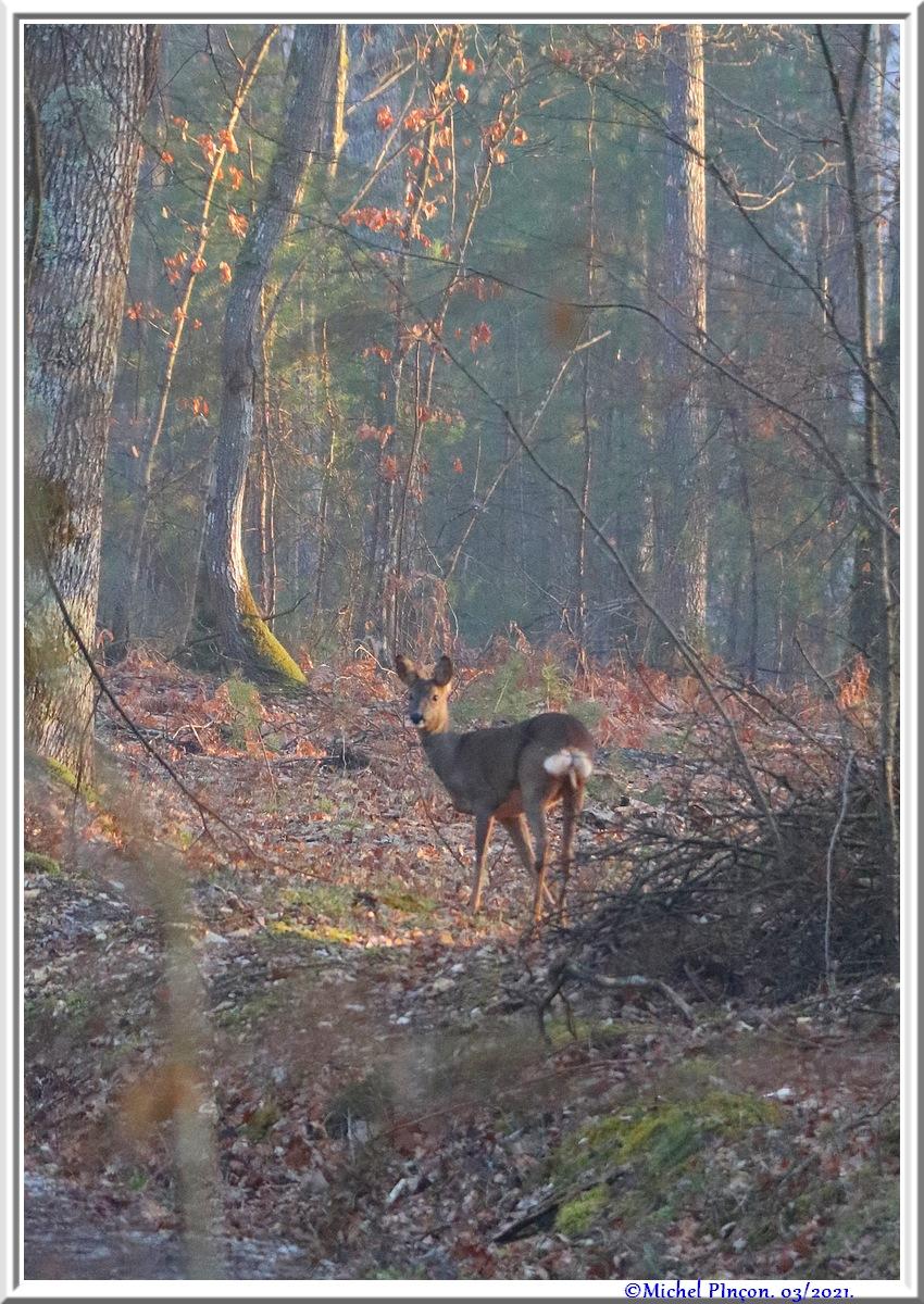[fil ouvert] la forêt dans tous ses états - Page 30 Dsc10842