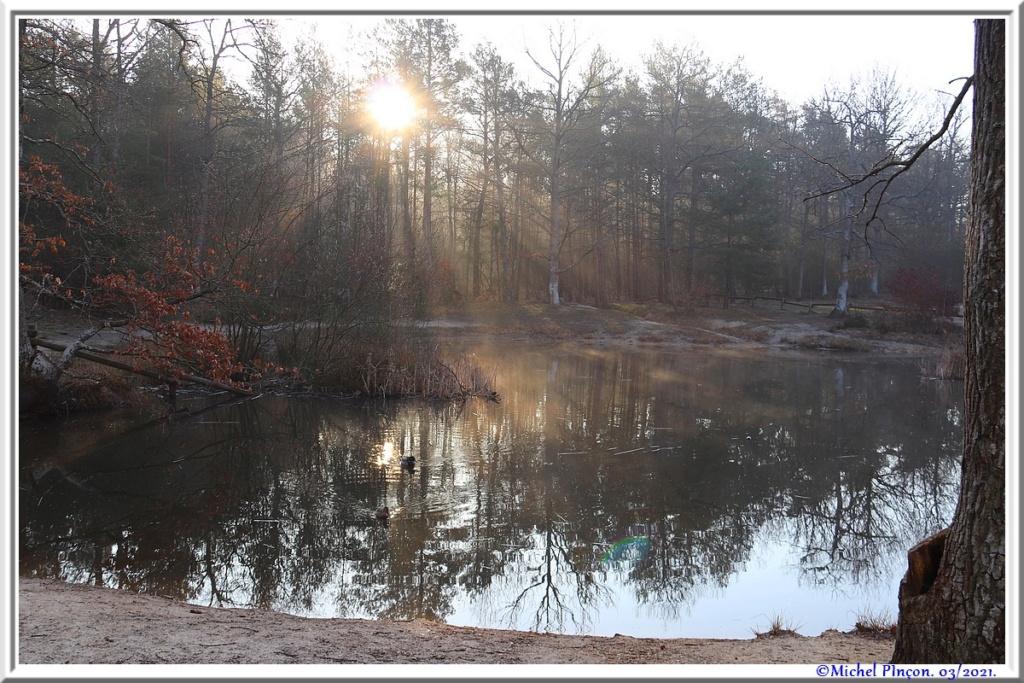 [fil ouvert] la forêt dans tous ses états - Page 30 Dsc10843