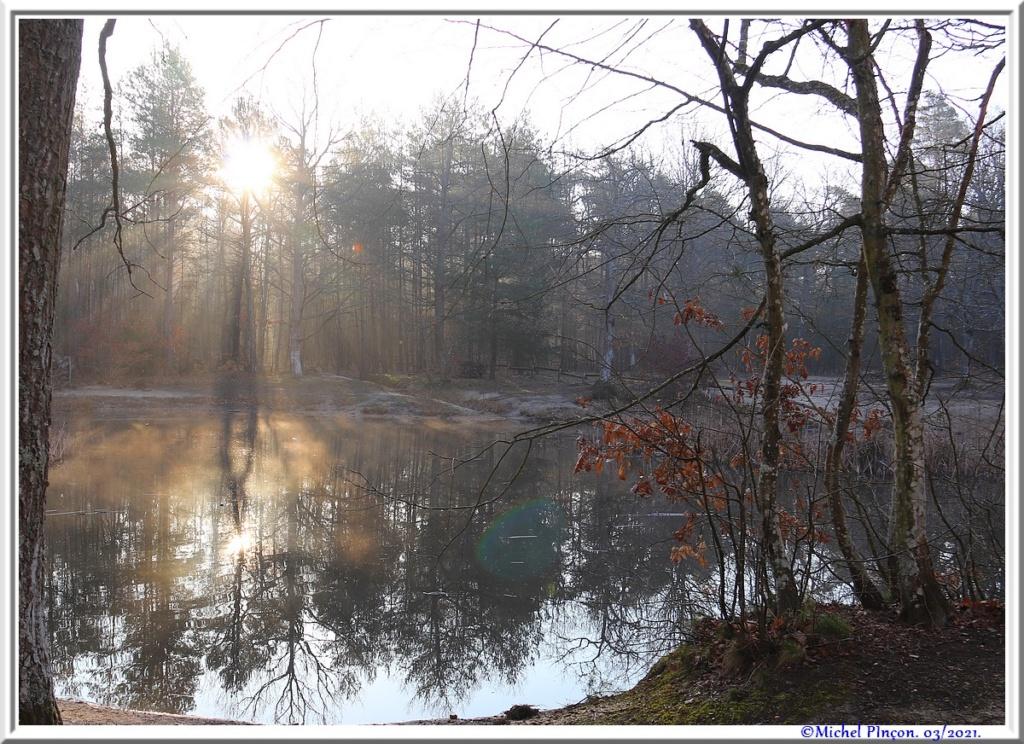 [fil ouvert] la forêt dans tous ses états - Page 30 Dsc10844