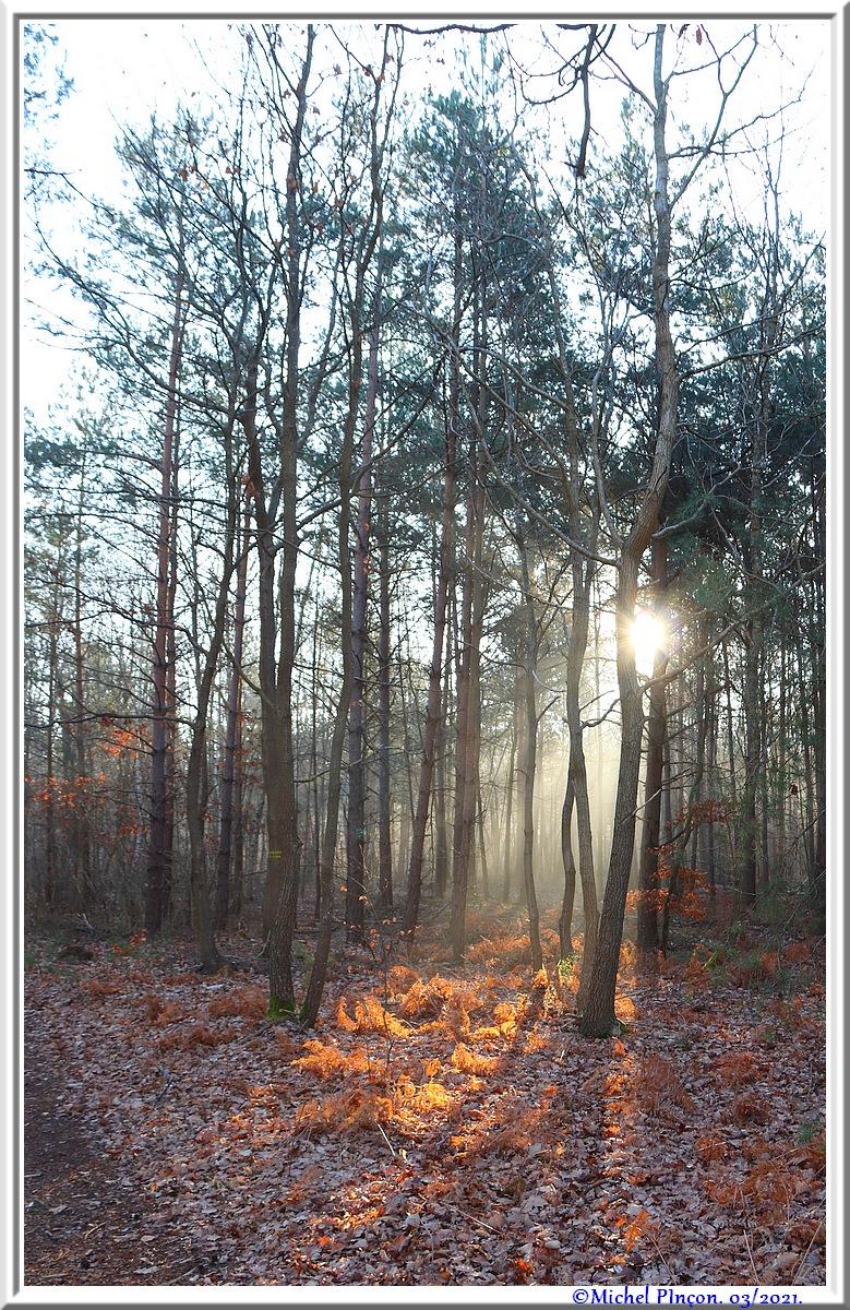 [fil ouvert] la forêt dans tous ses états - Page 30 Dsc10846