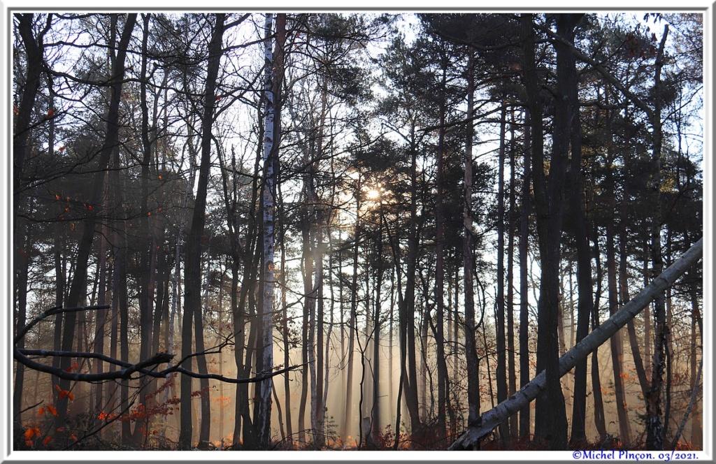 [fil ouvert] la forêt dans tous ses états - Page 30 Dsc10870