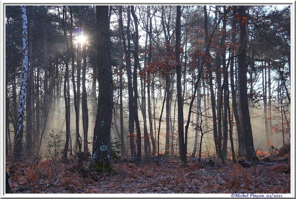 [fil ouvert] la forêt dans tous ses états - Page 30 Dsc10872