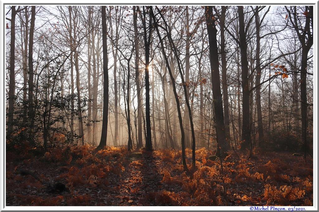 [fil ouvert] la forêt dans tous ses états - Page 30 Dsc10873