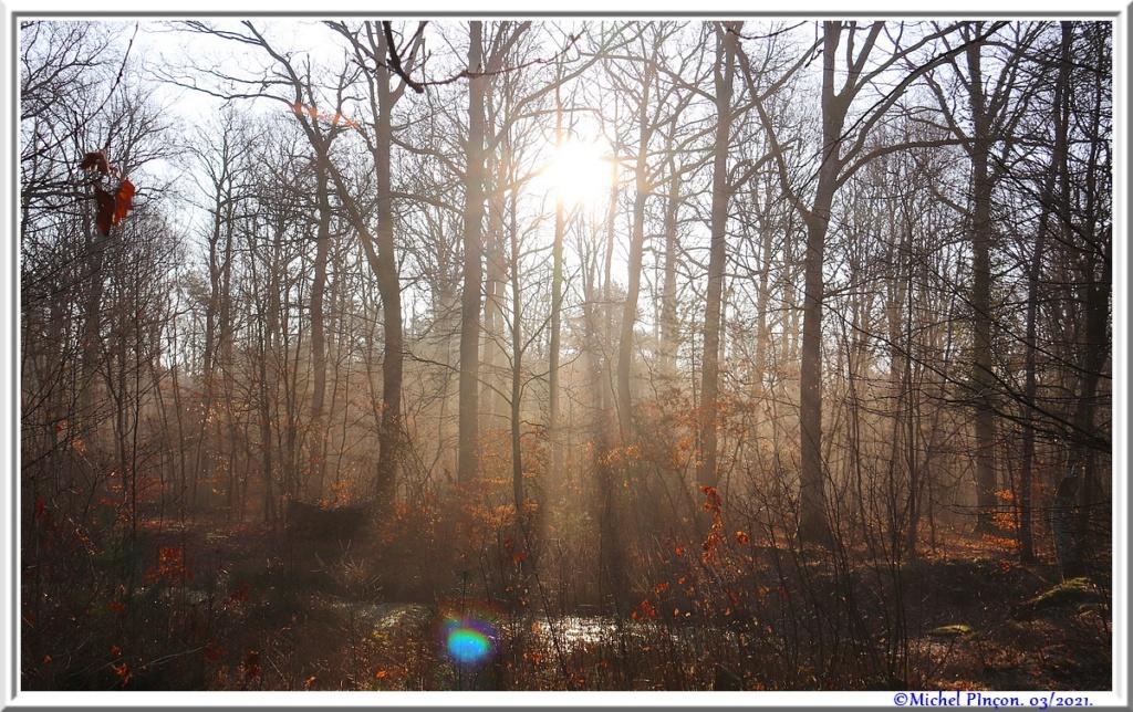 [fil ouvert] la forêt dans tous ses états - Page 30 Dsc10875