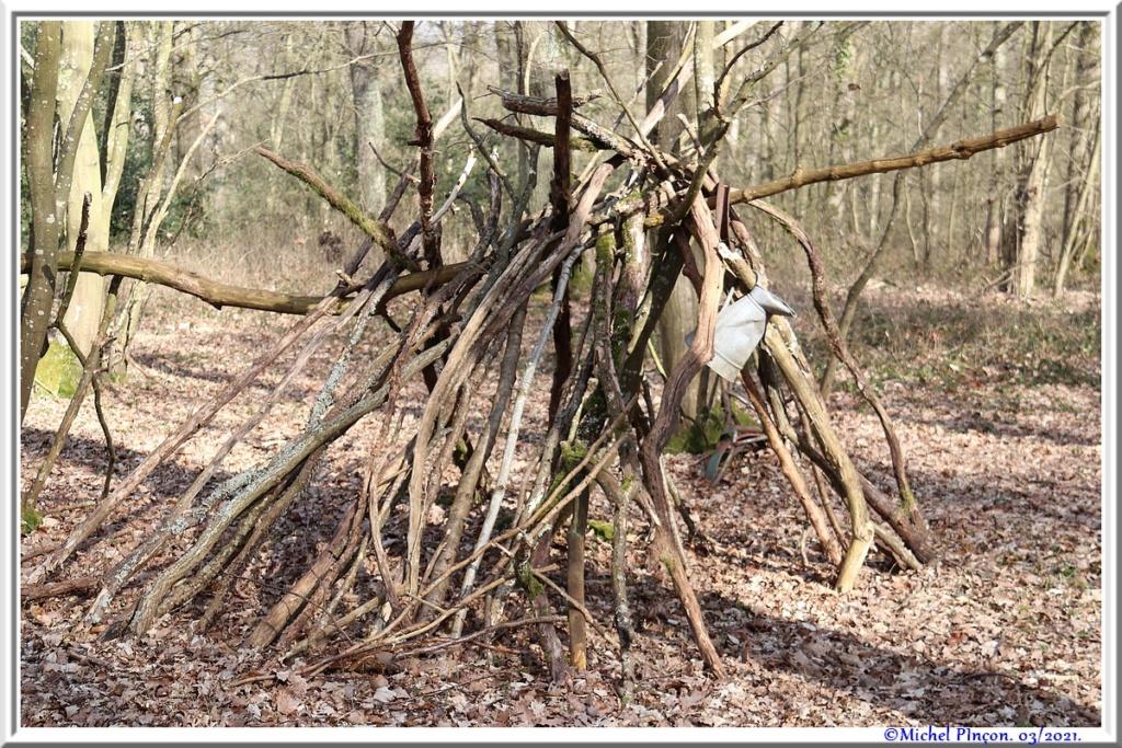 [fil ouvert] la forêt dans tous ses états - Page 30 Dsc10877