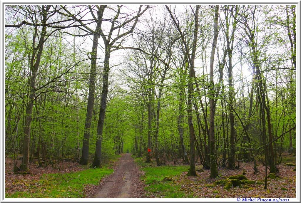 [fil ouvert] la forêt dans tous ses états - Page 30 Dsc10878