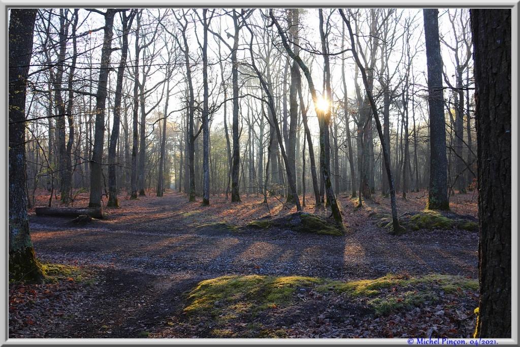 [fil ouvert] la forêt dans tous ses états - Page 30 Dsc10880