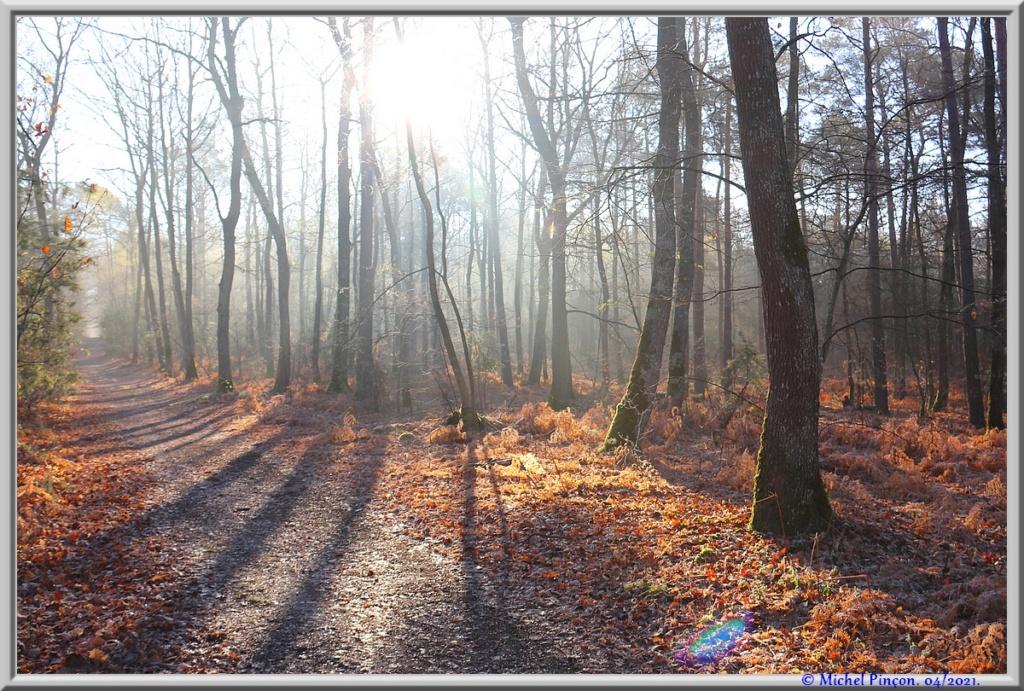[fil ouvert] la forêt dans tous ses états - Page 30 Dsc10881
