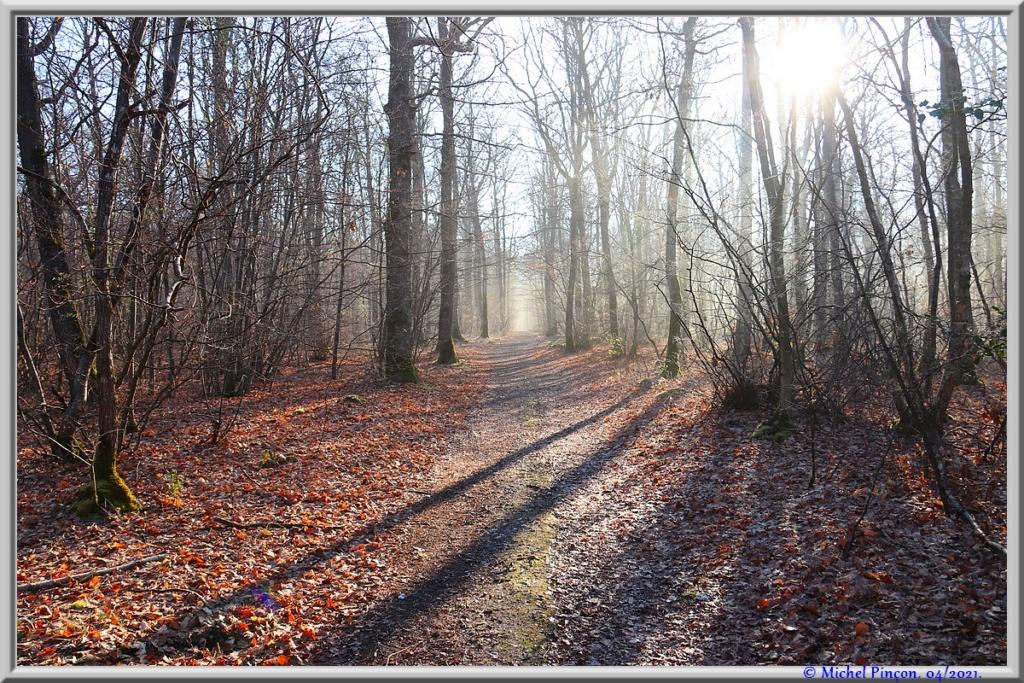 [fil ouvert] la forêt dans tous ses états - Page 30 Dsc10882