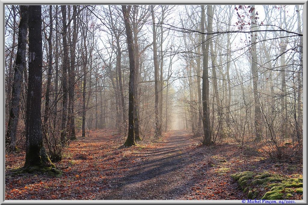 [fil ouvert] la forêt dans tous ses états - Page 30 Dsc10883