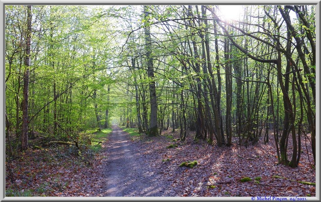 [fil ouvert] la forêt dans tous ses états - Page 30 Dsc10886