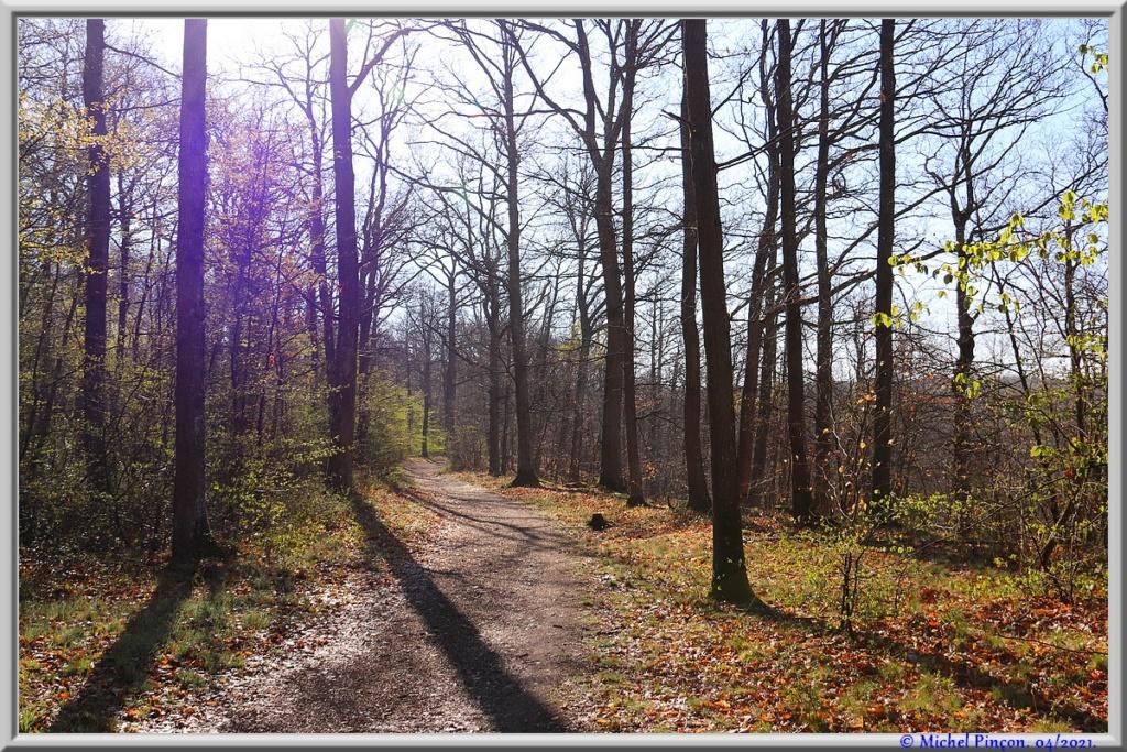 [fil ouvert] la forêt dans tous ses états - Page 30 Dsc10887