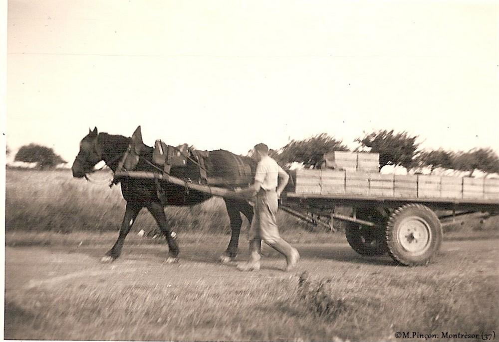 Nos vieilles photos argentiques (N/B) numérisées  - Page 2 Numzo230